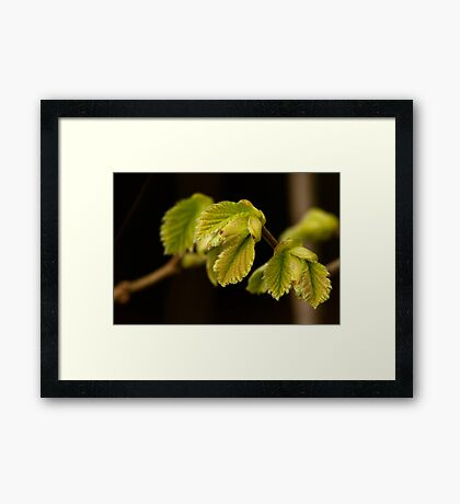 Quiet outburst of new life Framed Print