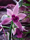Orchid Collection - 8 by Marcia Rubin