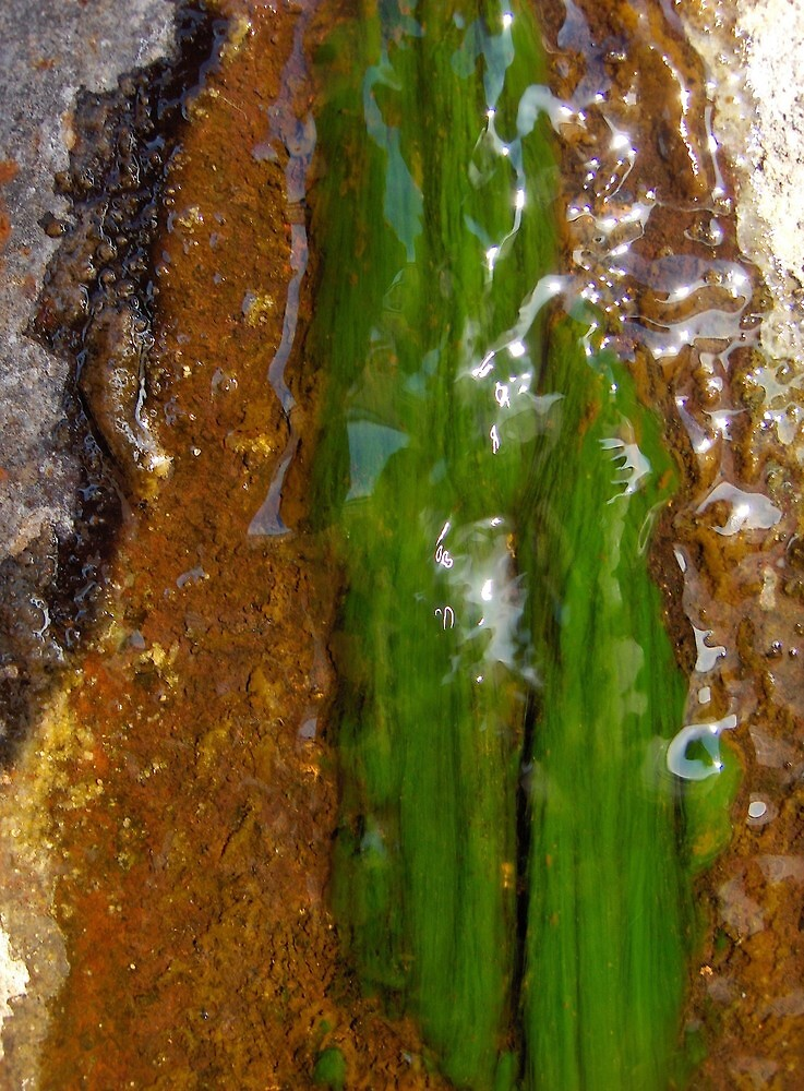 Algae by Kathilee