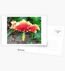 Hibiscus Beauty Postcards