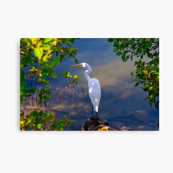 On the shore of Cabbage Tree Creek Canvas Print