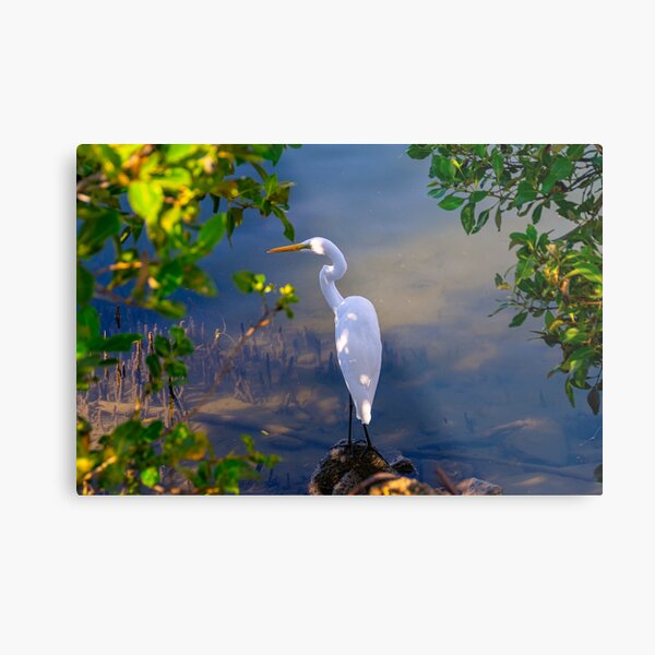 On the shore of Cabbage Tree Creek Metal Print