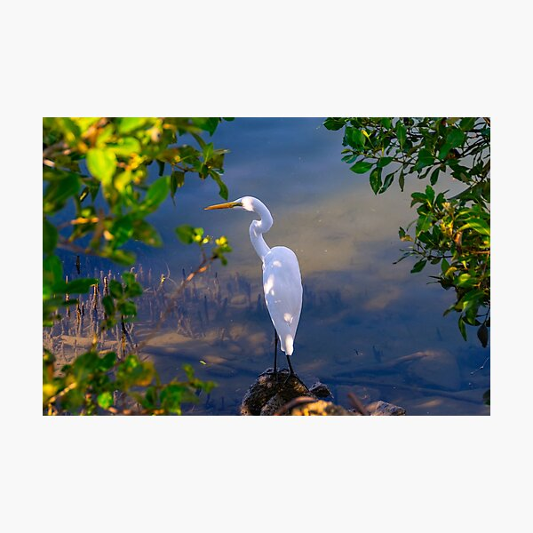 On the shore of Cabbage Tree Creek Photographic Print