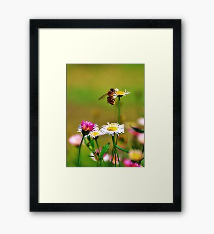 Make honey while the sun shines Framed Print