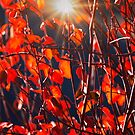 Fall Colors  by Alex Preiss