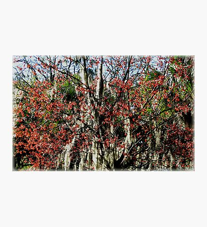 Colours In Trees Photographic Print