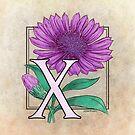 X is for Xeranthemum by Stephanie Smith