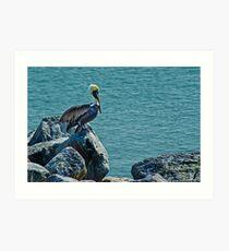 Perching Brown Pelican Art Print