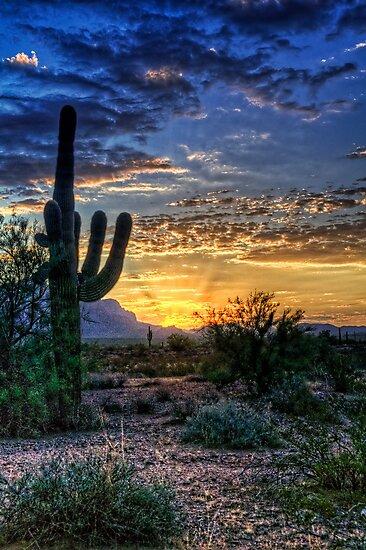 Sonoran Sunrise  by Saija  Lehtonen