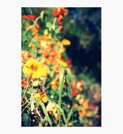 Blooming Vintage Photographic Print
