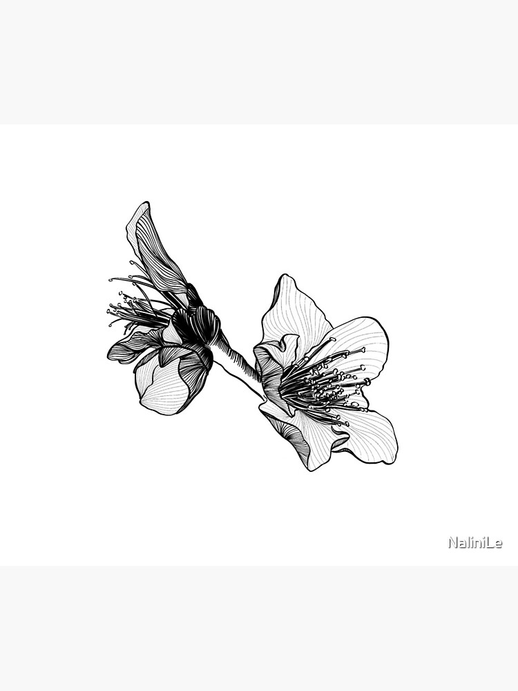Almond Blossom Illustration by NaliniLe