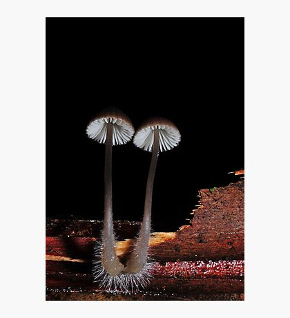 Nice little brown pair Photographic Print