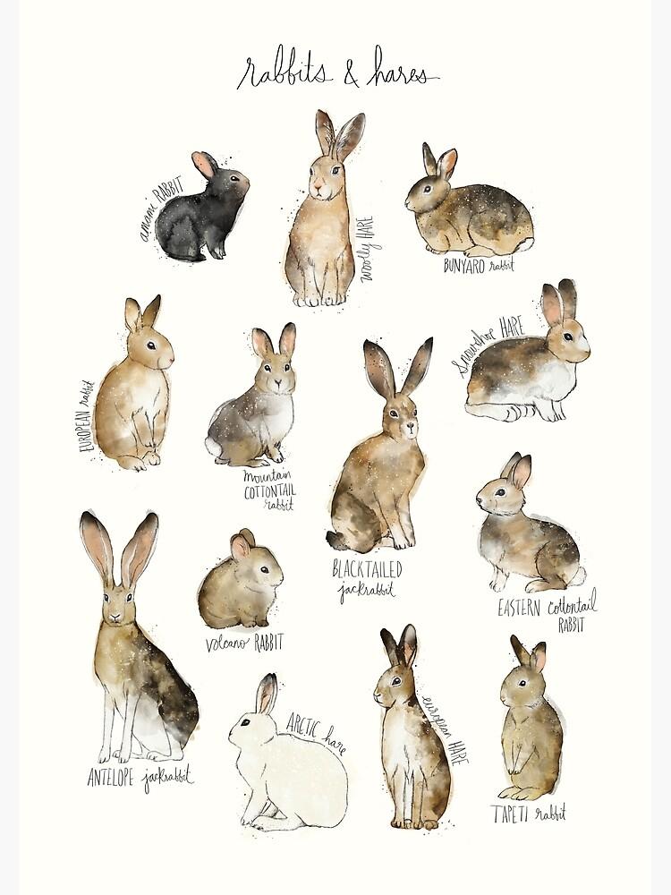 Kaninchen und Hasen von AmyHamilton