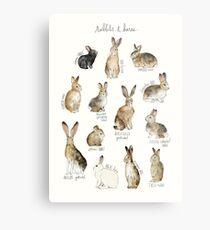 Rabbits & Hares Metal Print