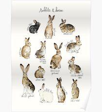 Kaninchen und Hasen Poster