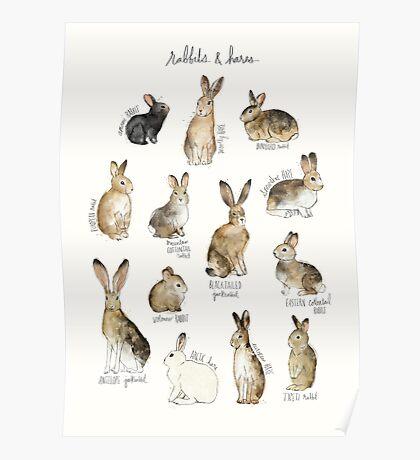 Rabbits & Hares Poster