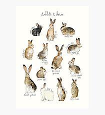 Rabbits & Hares Photographic Print