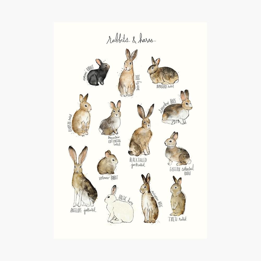Kaninchen und Hasen Fotodruck