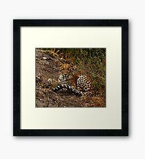 Leopard - Chobe National Park, Botswana Framed Print