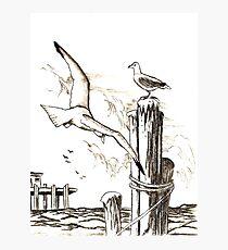 Seagulls Photographic Print