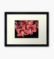 Lilly of the Field Framed Print