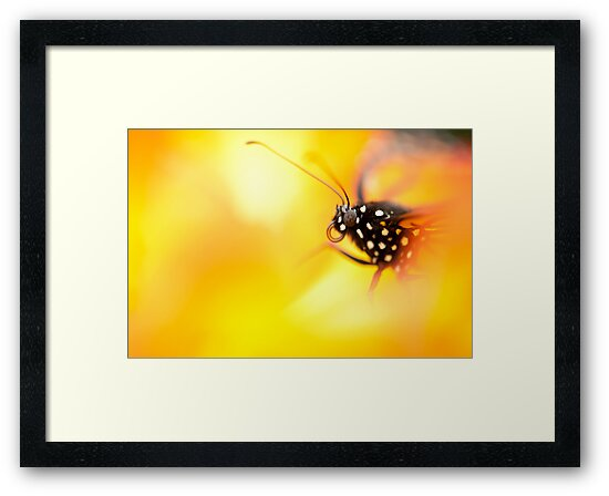 Butterfly 7 by Jacinthe Brault