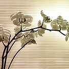 Orchid II by VallaV