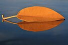 Fall leaf on the Kona Wall by Randy Richards