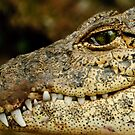 Cuban Crocodile by Michael Garson