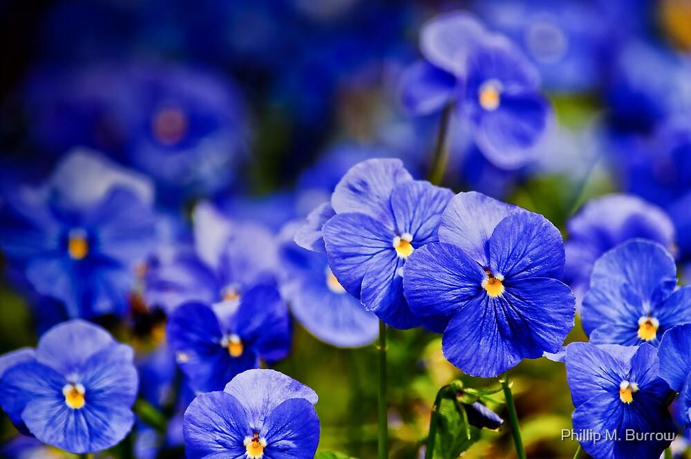 Blue Monday by Phillip M. Burrow
