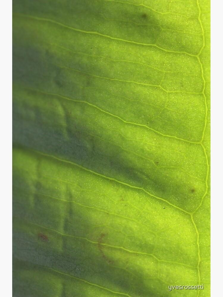 vert' by yvesrossetti