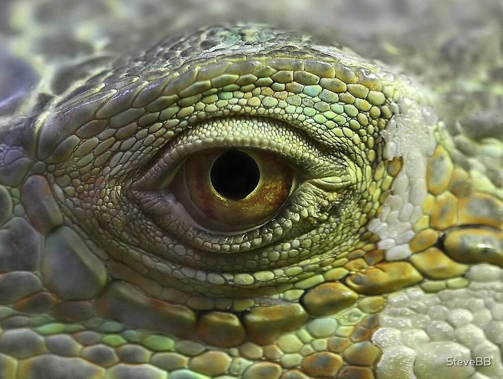 Eye to Scale by SteveBB