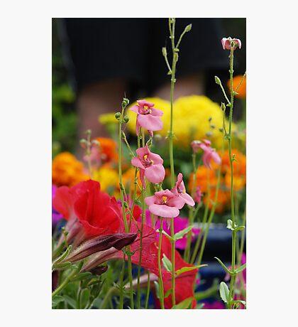 Colourful Garden Photographic Print