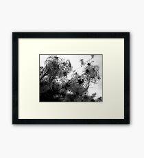 Furry Weeds Framed Print