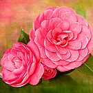 Painterly Camellias by Leslie Nicole