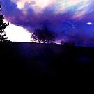 Purple Night by Linda Ursin