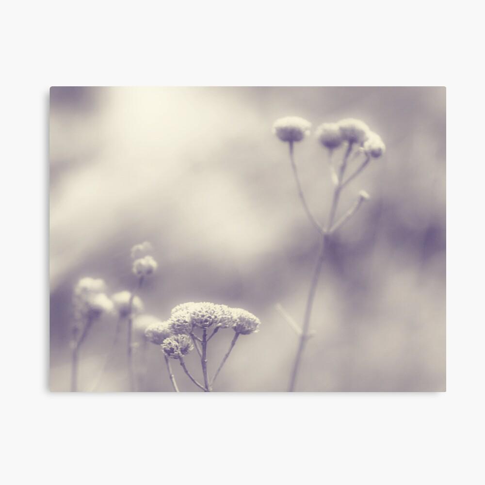 Memories - Lou Campbell Nature Preserve Canvas Print
