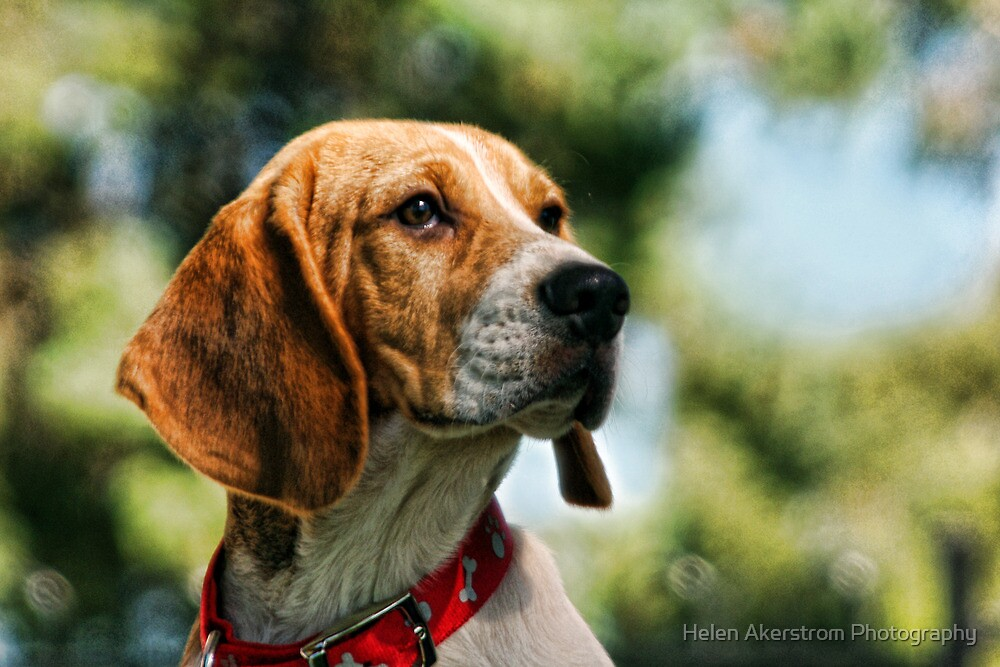 BAXTER by Helen Akerstrom Photography
