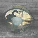 Mute Swans by Meladana