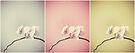 orchid triptych by Angel Warda