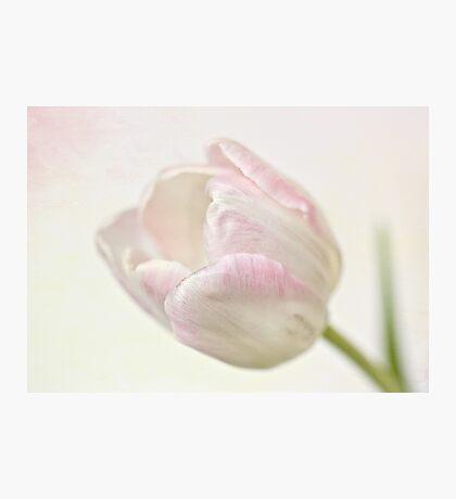 Pink sherbert Photographic Print