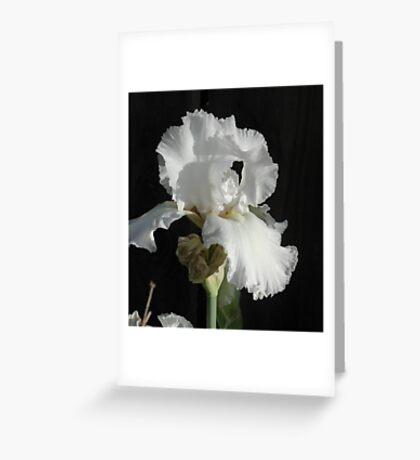 Immortality Iris Photo Greeting Card