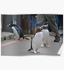 Penguin Parade Poster