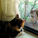 Curious Squirrel by albertsville