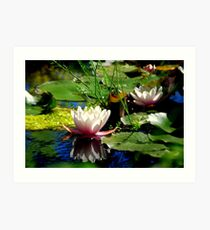Waterlilies - Minter Gardens BC Art Print