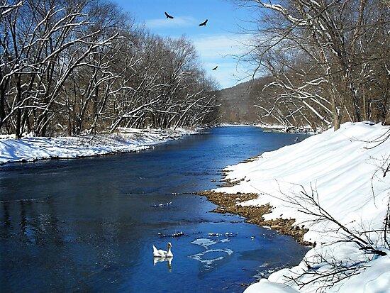 Winter Retreat by NatureGreeting Cards ©ccwri