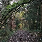 North Downs Way -- Tree Arches by rsangsterkelly