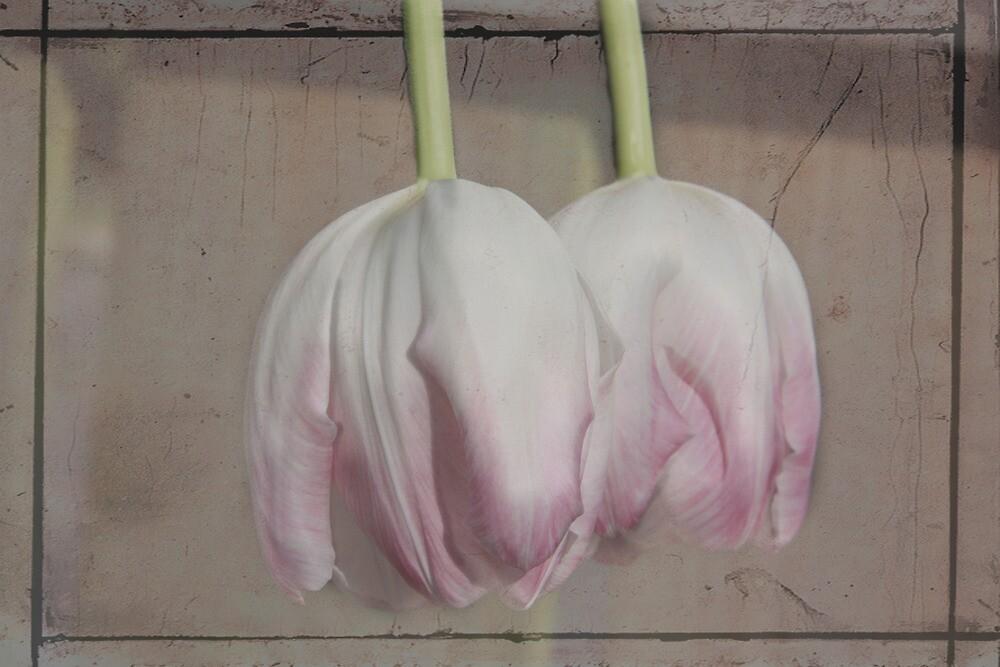Pale Pink by Julesrules