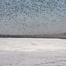 100K+ Series - Swarms In The Distance by DigitallyStill
