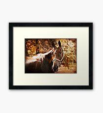 Chestnut horse Framed Print